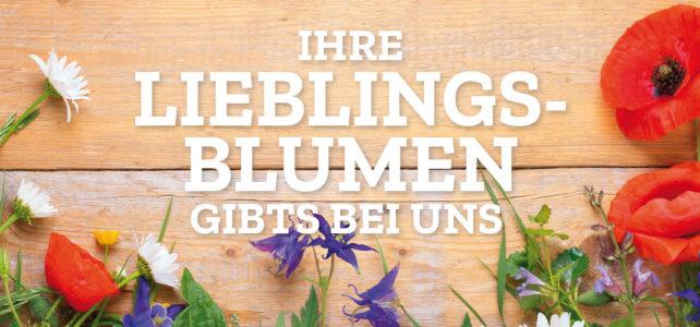 Besuch vom Fernsehen – ein kleiner Film über Blumen Stellingen